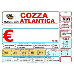 COZZA ATLANTICA